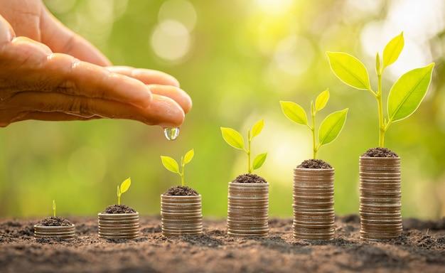 コインスタックの上に小さな木に水をまく手。ビジネスの成功、金融またはお金の成長の概念