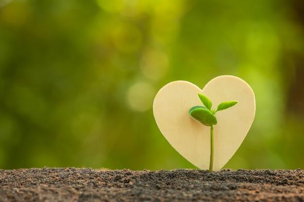 Зеленый росток, растущий в почве и деревянный символ сердца на открытом солнечном свете и зеленые размытия