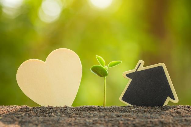 Зеленый росток, растущий в почве и деревянный символ сердца и дома на открытом солнечном свете и зеленое размытие дерево любви, спасти мир или концепция выращивания и окружающей среды