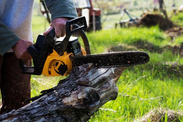 人間は落ちた木を切る。危険な仕事。
