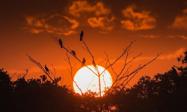 夕日の木の鳥の座席のシルエット