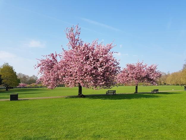 バタシー公園で春にピンクの花と木