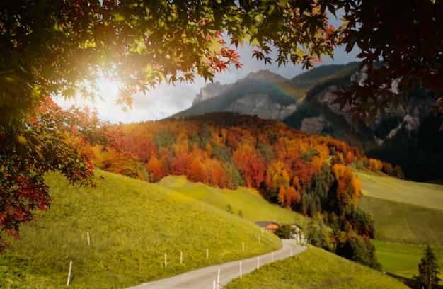 Осенние листья с размытием в трансильвании