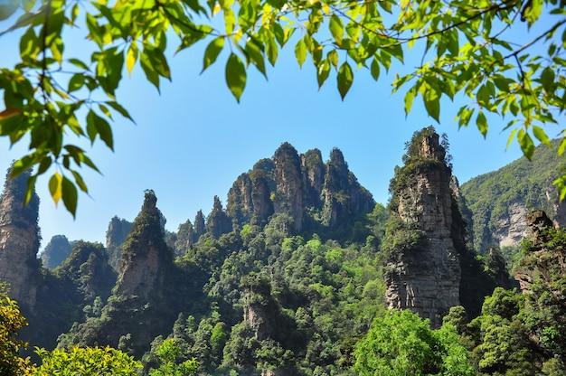 岩のあるジャングルの風景