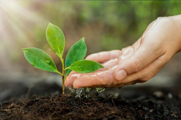 若い植物の苗の新しい生命は黒い土で育ちます