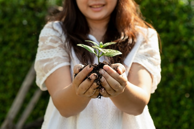 Росток дерева молодого завода в руке женщины.