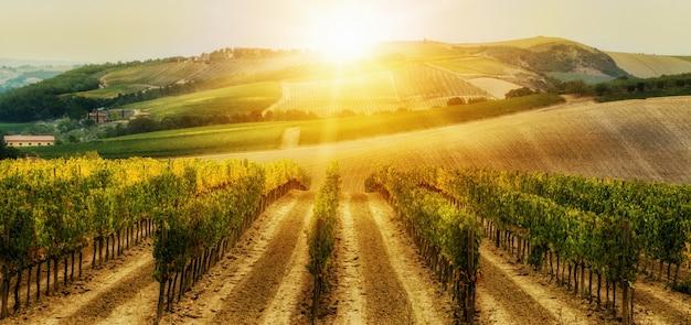 イタリア、トスカーナのブドウ園の風景。