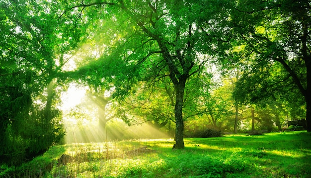 日の出の緑の森の風景。