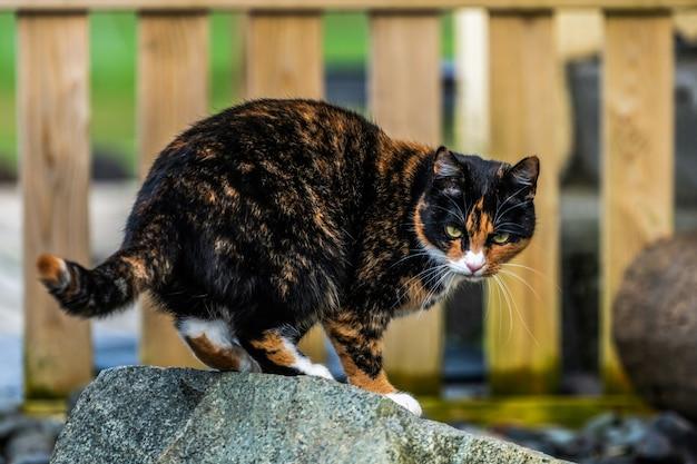 Черно-коричневого окраса кошка вне дома.