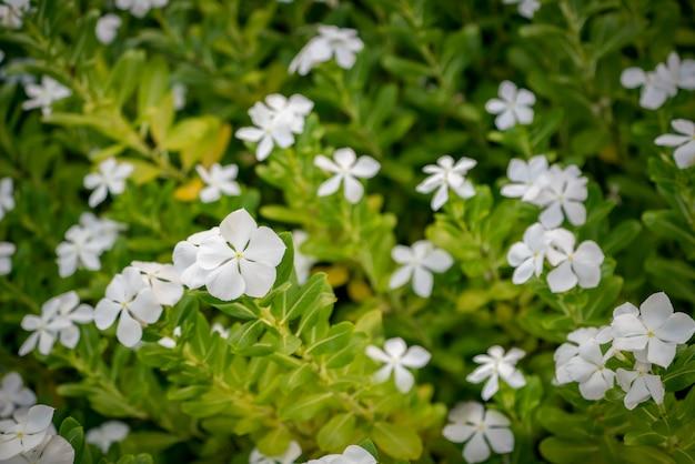 フラワーズ。花の暖かいトーンのイメージ。朝の日差しが花を照らしています。フロントの花にセレクティブフォーカス。