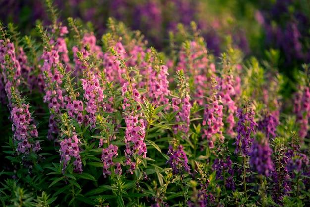 花の暖かいトーンのイメージ。朝の日差しが花を照らしています。