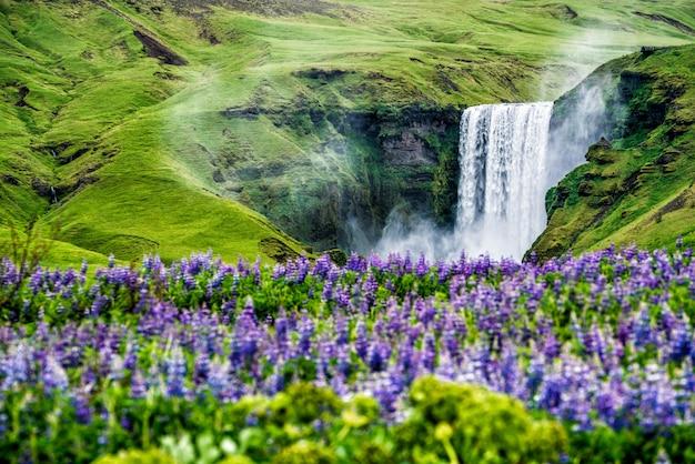 夏のアイスランドのスコガフォスの滝。