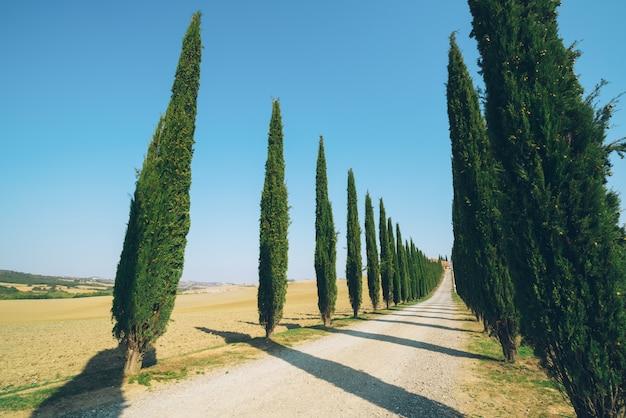 イタリアのヒノキの木の道のトスカーナの風景。