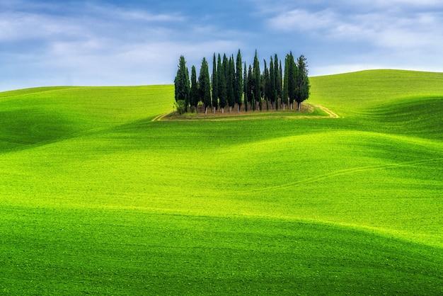 Пейзаж зеленых холмов тосканы, италия