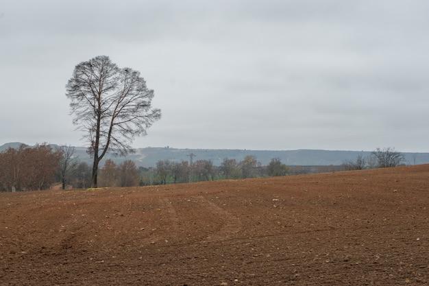 彫刻が施された丘の上の孤独な木