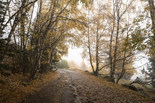 霧の秋の森