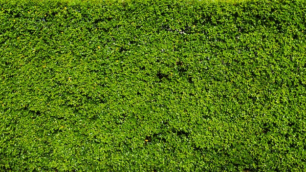 自然の緑の葉の背景