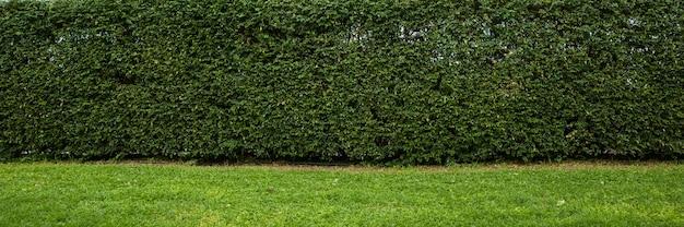 生垣壁背景パノラマ