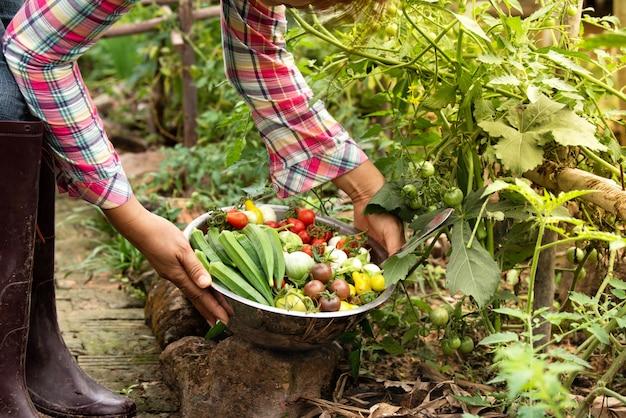 女性収穫野菜の農場で有機