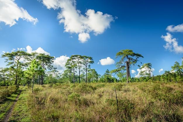 サバンナの風景と草原のフィールド