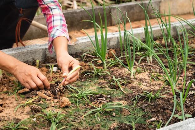 女性の農場で若いタマネギを植えること