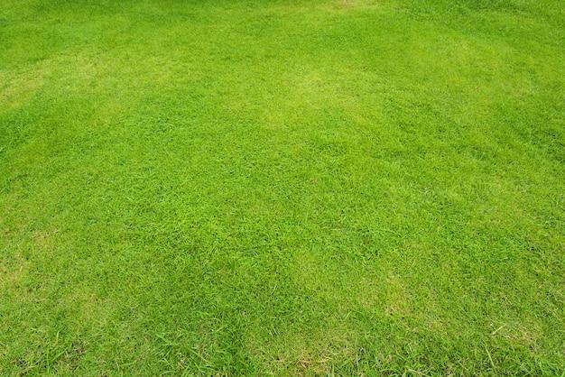 自然の緑の芝生の背景と質感、緑の芝生フィールドの背景