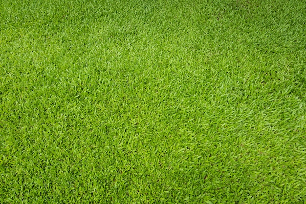 緑の芝生の背景と織り目加工、上面図とサッカー場で芝生の床の詳細