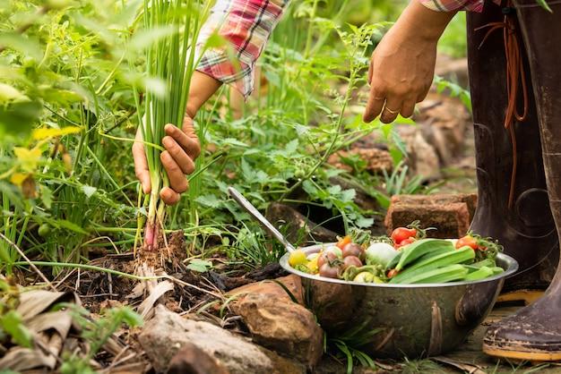 農場で有機野菜を収穫する女性、収穫された季節野菜、健康的なライフスタイルのための有機農業
