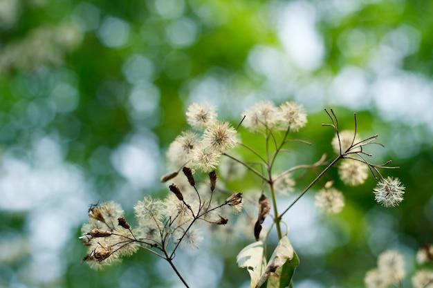 秋の草原の花。
