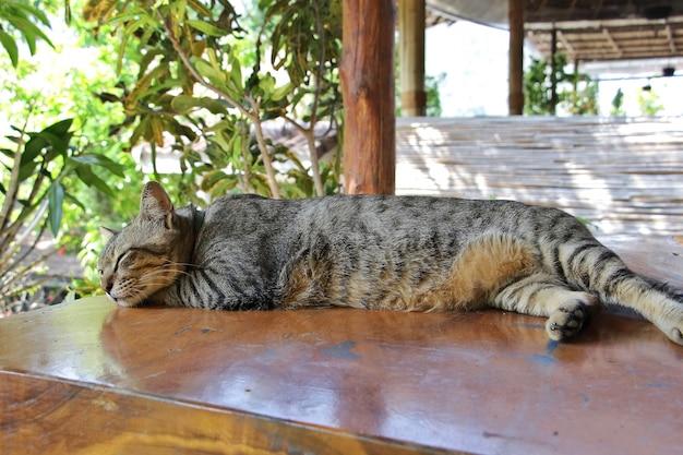 Милый серый кот дремал, глаза закрылись, а ноги заправлены, лежа на деревянном столе.