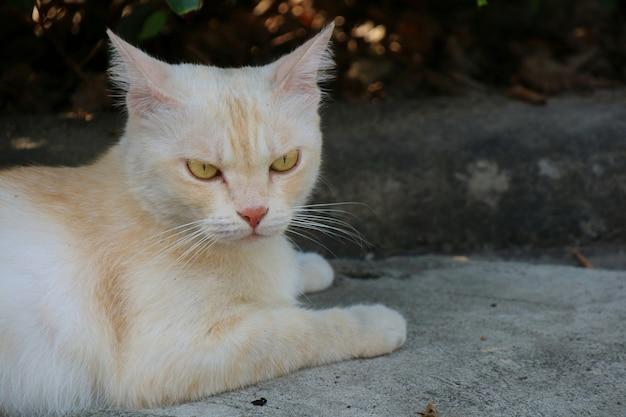 不思議に見えて、コンクリートの床に横たわっている孤独なかわいい猫。動物のコンセプト。