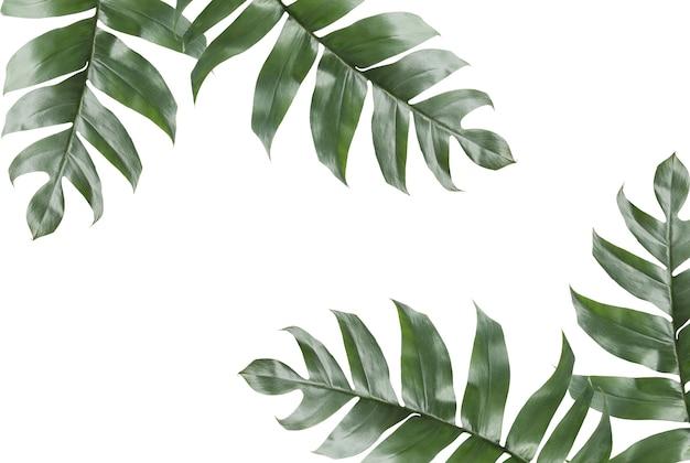 Фон тропических листьев с копией пространства