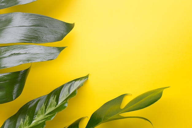 エコの背景やジャングルの壁紙の背景の黄色の背景のデザインに緑の熱帯の葉。