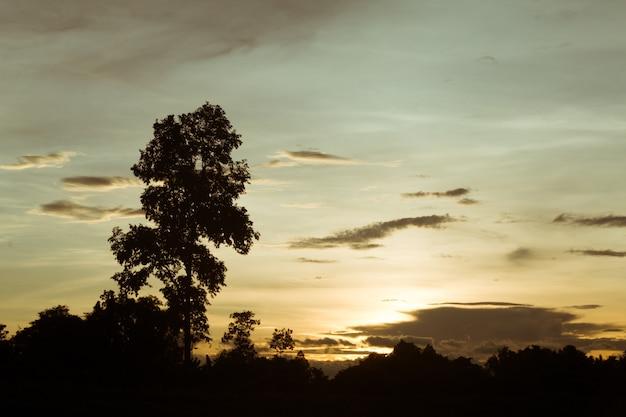 夕暮れの空と木の雨雲。高いレベルのノイズ。雲と夜の空。