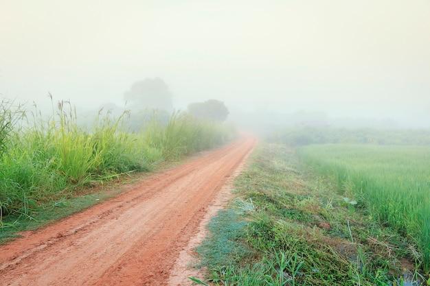 霧の中への道