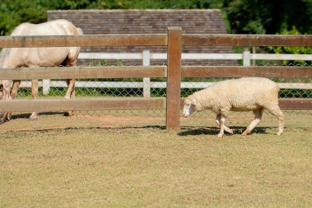 丘の中腹に放牧羊