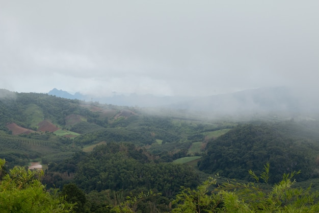 山の霧とおだやかな暗い日
