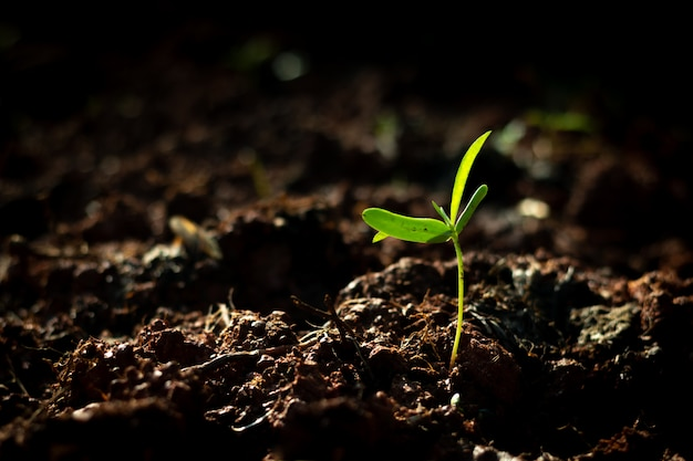 夏の朝の光の中で土壌から生長する若い植物