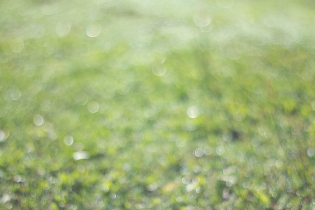 Лето естественный зеленый градиент света и размытый эффект