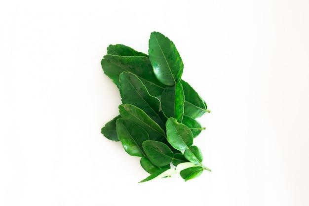 白で隔離される新鮮なグリーンカフィアライムの葉