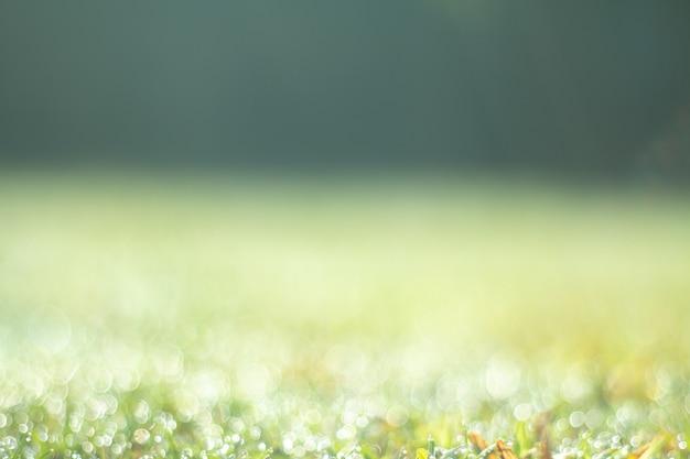Летний натуральный зеленый градиент света и размытый эффект фона