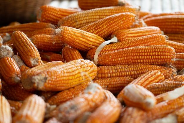 Процесс сбора урожая сушеная кукуруза с бамбуковой корзиной