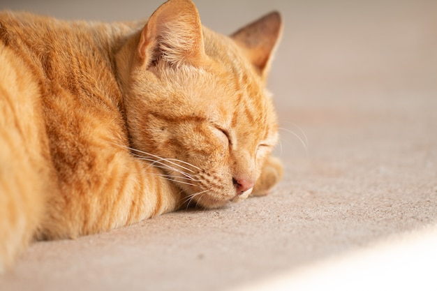 Крупный план милый рыжий полосатый кот