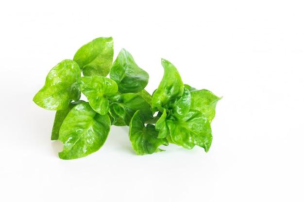 白、孤立した野菜オブジェクトに新鮮なクレソン有機野菜