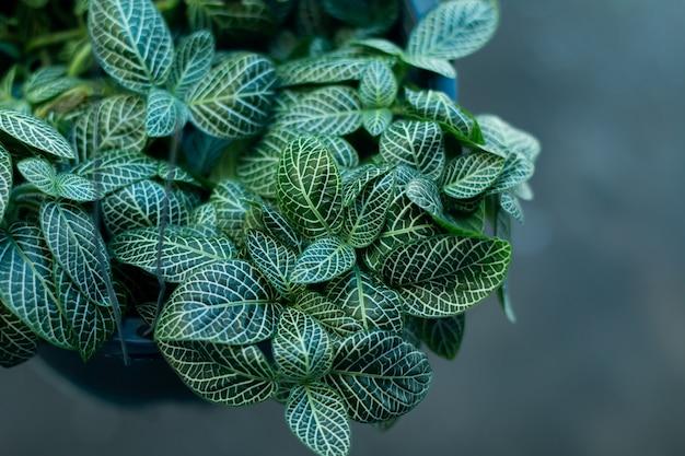 Вид сверху растение в горшке украшения в магазине