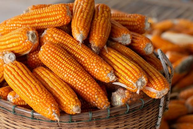 Процесс сбора урожая сушеная кукуруза с бамбуковой корзиной.