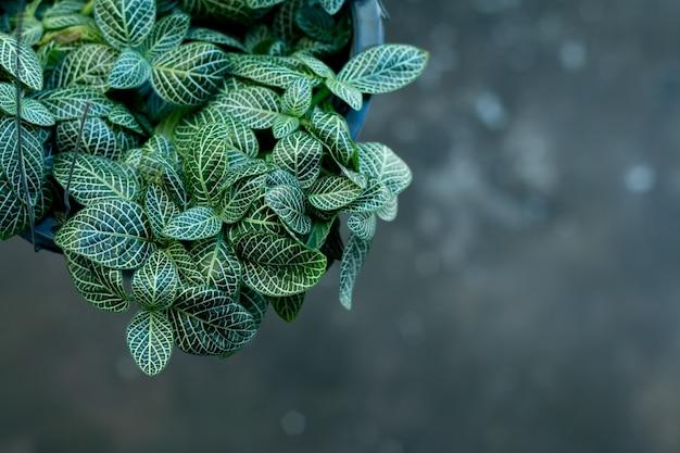 ショップでポット装飾のトップビュー植物。