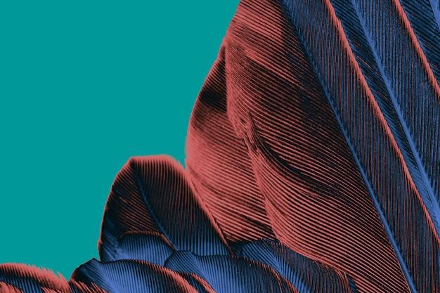 美しい羽のパターンのテクスチャの背景