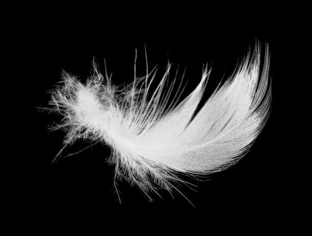 黒の背景に分離された白い羽