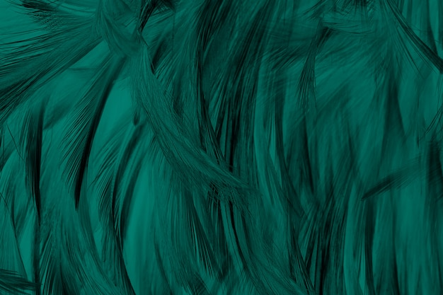美しいダークグリーンフロリダキー色トーン羽テクスチャ背景、トレンドカラー